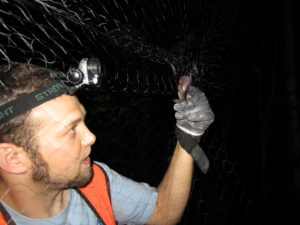 Jeremy Sheets, Senior Wildlife Biologist at Orbis Environmental Consulting examines a bat caught during a bat field survey