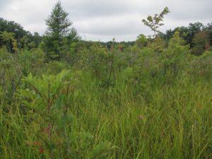 bog 1 compressed_8-18-2014_Lydick Bog, St. Joseph County, Indiana